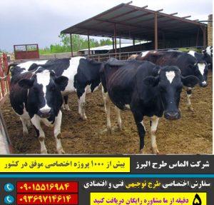 پرواربندی گوساله 10 راسی