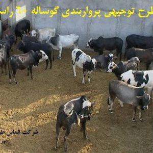 طرح توجیهی پرواربندی گوساله 60 راسی | پرواربندی گوساله pdf