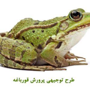 طرح توجیهی پرورش قورباغه pdf | طرح توجیهی پرورش قورباغه گوشتی در ایران
