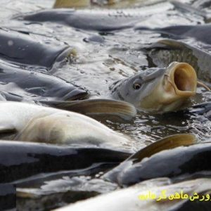 طرح توجیهی پرورش ماهی گرمابی pdf   سود پرورش ماهی کپور در سال 1400