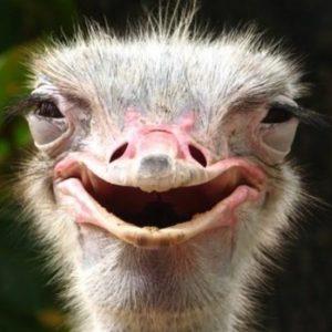 طرح توجیهی پرورش شتر مرغ (سال ۹۷) | پرورش شترمرغ