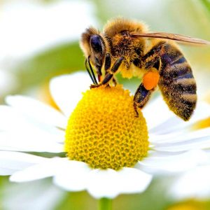 طرح توجیهی زنبورداری (97)