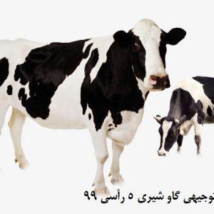 طرح توجیهی گاو شیری 5 رأسی 99   برآورد سود گاو شیری در سال 99