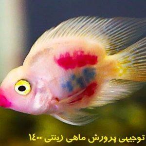 طرح توجیهی پرورش ماهی زینتی 1400 | برآورد طرح توجیهی پرورش ماهی زینتی در سال 1400